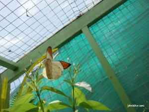 Another of my girlfriend's favorite shots @ Penang Butterfly Farm