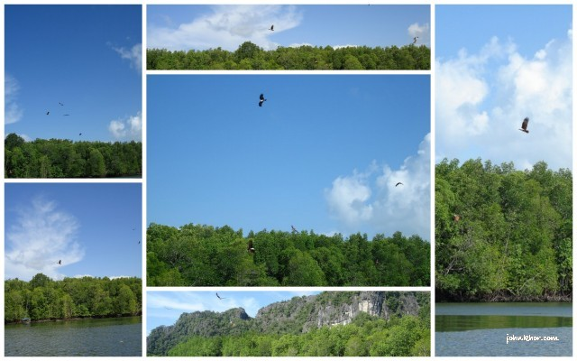 Langkawi Review Mangrove Jungles, Cave Adventure, Eagles Watching 14
