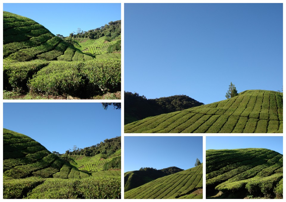 Cameron Highlands Trip 2010 (3)